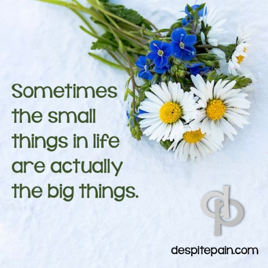 Small things are big things. flowers, daisies, blue flowers