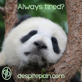 tired-panda-despitepain.com_